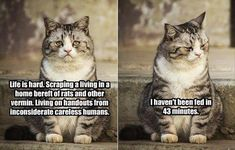 Attack Of The Funny Animal Pictures - 28 Pics