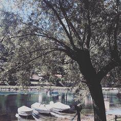 L'amore per il proprio paese. #lecco #pescarenico #lake #tree #nature #adda…