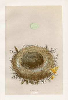 Whinchat USD  $49 F.O. Morris Nest & Egg Prints 1892 #birds #ornithology #nests #antiqueprint
