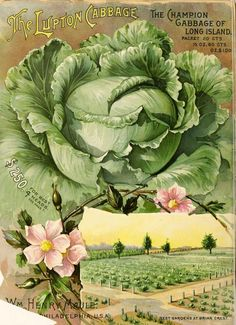 Pitcher Back Vintage Seed Cover Picture Art Print Poster A4 A3 A2 A1