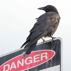 "June Hunter (@junehunterimages) on Instagram: ""Another crow warning message from my morning trip to New Brighton Park. #crow #warning #danger…"""