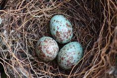 I love bird's nests