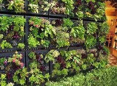 Tournesol Siteworks heeft een systeem ontwikkeld voor verticaal tuinieren. Het systeem heet Elmich Vertical Greening Module. Basiselementen vormen een basisrails die aan de wand te monteren is, daarop monteerbare kratjes en verder een drainagesysteem van kleine slangetjes.    De slangetjes geven druppelsgewijs water af aan de grond en daarmee de plantjes.    Het systeem is onder andere geinstalleerd als eetbare tuin bij Pizzeria Mozza in Los Angeles.