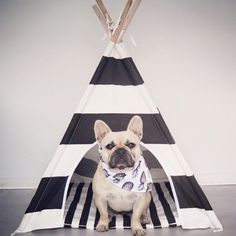 for the pets Baby Dogs, Pet Dogs, Dog Cat, Dog Houses, Dog Supplies, Pet Shop, Dog Grooming, I Love Dogs, Pugs