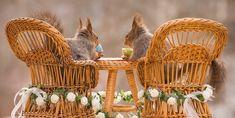 FUNNY SQUIRRELS (Eekhoorn)