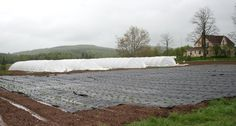 New Brunswick farmers do all they can to eek out a longer growing season, including using groundcover like this. New Brunswick, Farmers, Agriculture, Friday, Backyard, Seasons, Canning, Outdoor, Outdoors