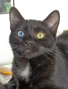 unusal cats | Unusual black cat