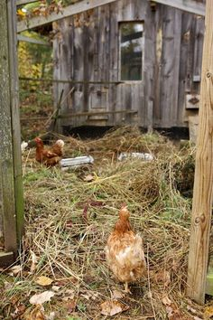 Chicken House Farm straw bale chicken coop. new mexico | chicken coops | pinterest