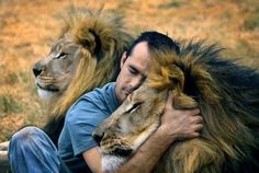 Kevin Richardson (Backstreetboy) = the lion whisperer :)) ; Kingdom-of-the-White-Lion-Parks in the Gauteng-Provinz, Südafrika. Kevin Richardson, Beautiful Creatures, Animals Beautiful, Beautiful Lion, Beautiful Things, Big Cats, Cats And Kittens, Animals And Pets, Cute Animals