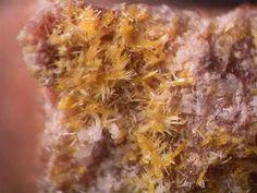 Dewindtite, Pb3[H(UO2)3O2(PO4)2]2•12(H2O), La Faye Mine, Grury, Saone et Loire, France. Yellow needels up to 0.5 mm large
