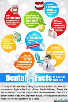 Useful facts about your teeth. Poulsbo Children's Dentistry, pediatric dentist in Poulsbo, WA @ www.poulsbochildrensdentistry.com