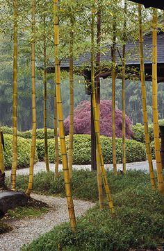 Gardens of the Spirit – Kyoto | Allan Mandell