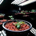 5 Important Facts About Hydroponics Marijuana Systems