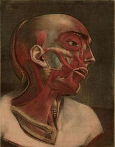 Essai_d_Anatomie_1754_0005 by Public Domain Review, via Flickr