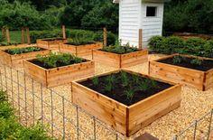 How to Grow Red Onions in NJ Zone 6 | NJ Gardening Tips | Raised Bed Gardening | Garden Beds NJ