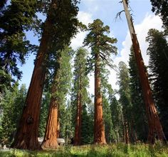Check out some of the oldest trees in the world--1,000 year-old sequoias--on this 4-mile loop through southern Yosemite's Mariposa Grove.