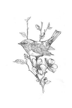 Line Drawing of Bird on Flowering Branch Art Print at Art.com