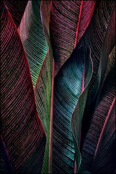 ~~backlit fronds by jody9~~