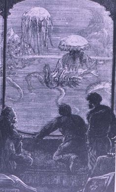 Capt Nemo observing jellyfish