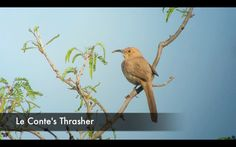 Thrasher Quest
