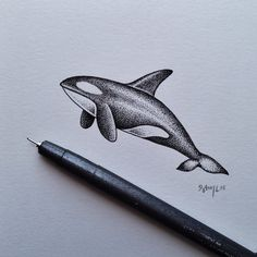 **Orca...my favorite animal.** WILLY  #orca #illustration