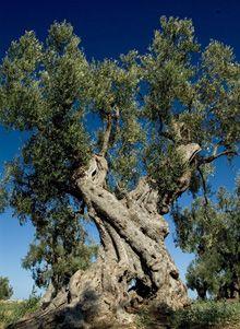 Natura e paesaggio - Puglia