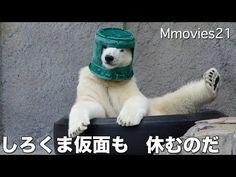 Polar bear cub turns bucket into helmet | MNN - Mother Nature Network