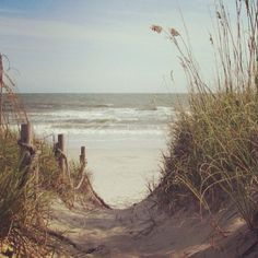 walkway to the beach...oak island, north carolina. picture perfect.