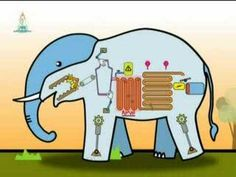 Spot to teach children about the importance of the elephant as a super keystone species: created by Elephant Reintroduction Foundation Science Lessons, Science Activities, Curriculum, Homeschool, Seed Dispersal, Keystone Species, Teaching Strategies, Zoology, Teaching Kids