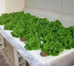 Main image for 'How to Build a Static Hydroponics System'
