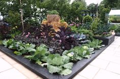 Beautiful rows of cabbages, dahlias, and kale in the RHS Kitchen Garden, which was designed by Juliet Sargeant for the RHS Hampton Court Palace Flower Show Straw Bale Gardening, Rhs Hampton Court, Gardens Of The World, Potager Garden, Garden Images, Chelsea Flower Show, Edible Garden, Growing Vegetables, Vegetable Garden
