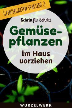 Jungpflanzen im Haus selber vorziehen: Hier kommt die Anleitung zur Aussaat an der Fensterbank mit allem, was du zum Thema Jungpflanzenanzucht wissen musst. #Garten #Wurzelwerk.Net