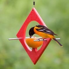 Attract vibrant Orioles with fruit, jelly and nectar feeders. Orioles love oranges and grape jelly. Duncraft has the largest selection of Oriole Feeders made with love in the USA. Oriole Bird Feeders, Wooden Bird Feeders, Bird House Feeder, Diy Bird Feeder, Finch Feeders, Squirrel Feeder, Bird House Plans, Bird Houses Diy, Bird Boxes