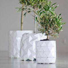 """Ayaskan Studio 