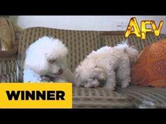 Puppy Treat Taker - AFV Prize Winner - AFV