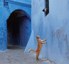 Romeo and Juliet   cats in Chefchaouen., Morocco. Posted on reddit by user Cactussa