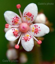 Unusual flower.