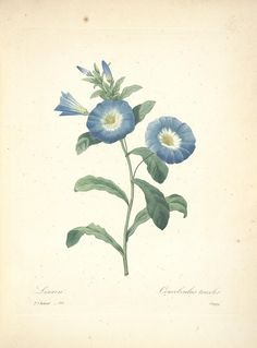 https://flic.kr/p/cXNGUb | n74_w1150 | Choix des plus belles fleurs :. Paris :Ernest Panckoucke,[1833?].. biodiversitylibrary.org/page/12695475