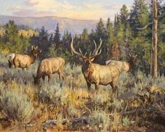 Please contact the artist for information on giclée prints and licensing Wildlife Paintings, Wildlife Art, Amazing Paintings, Oil Paintings, Elk Pictures, Nature Hunt, Cowboy Art, Southwest Art, Native Art