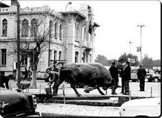 Kadıköy'de Boğa'nın ilk adresi - 1970'ler