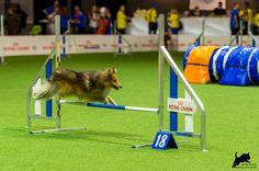 https://flic.kr/p/CGDGrw | Dmitri Kargin mit Stenley | AWC 2015 - Team Jumping Small