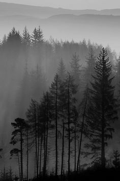 Black and White mountains nature forest mist Woods fog pines bleak