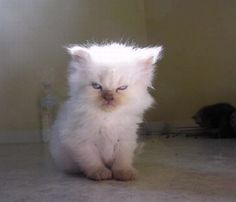 Next generation meme:  Grumpy Kitten