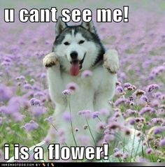 you cant see me!   i is a flower!