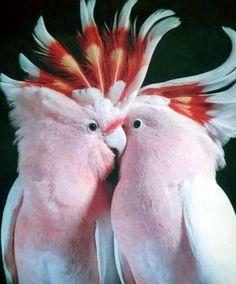 animal, pink, and love image