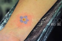 Tiny little forget-me-not
