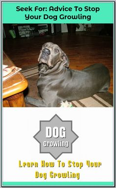 Ways Of Stopping Your Dog From Growling - Dog Training Tips and Tricks Dog Growling, Dog Training Tips, Dog Owners, Behavior, Your Dog, Best Friends, Inspire, Check, Dogs