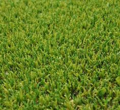 What are the factors that I should consider in choosing an artificial grass for my garden? Best Artificial Grass, Lawn Turf, Central Texas, Drought Tolerant, Irrigation, Herbs, Factors, Garden, Emerald