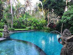 Pool views in the backyard. . . . . . #home #pool #poolparty #summervibes #summerready #beachready #beachparty #beachbody #beachlife #poolside #poolfloat #junglepool