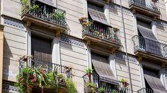 Wildpflanzen die ökologische Alternative für deinen Balkon